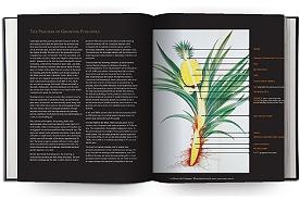 Early U.S. Pineapple