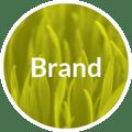 Creative Company branding process - brand
