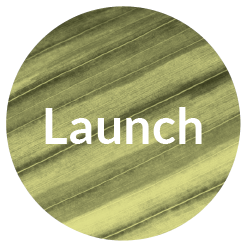 Launch_Brand_Timeline_Icon.png